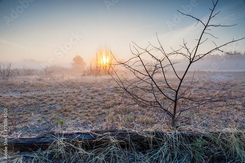 Fototapeta In the still barren foggy landscape, the rising sun sets the trees in flames - Schönow Heath, Bernau near Berlin, Germany