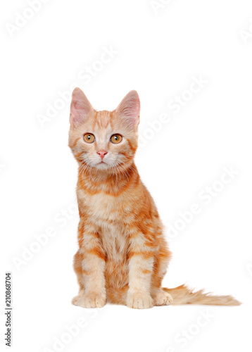 Pretty sitting  red haired kitten isolated on white - 210868704
