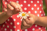 Child hands pulling petals off a daisy