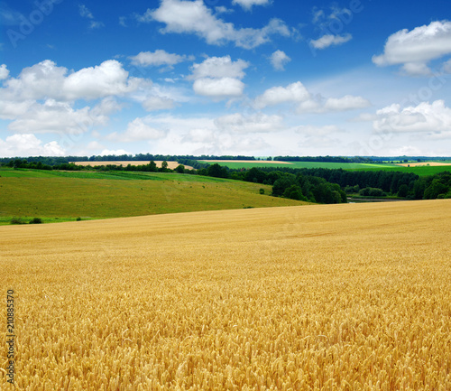 Fototapeta wheat field and clouds