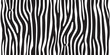 stripe animal jungle texture zebra vector black white print background seamless repeat