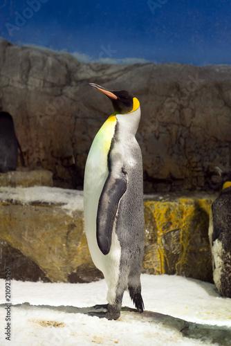 Aluminium Pinguin Portrait of a penguin standing on Ice