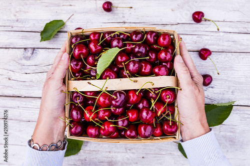 Aluminium Kersen Freshly picked ripe sweet cherry in a basket.