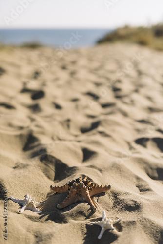 Fototapeta Summer elements on beach