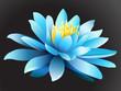 Lotus flower on dark background.