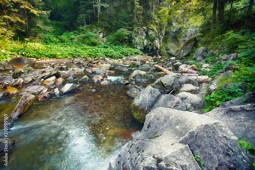 River in the forest. Beautiful natural landscape in the summer time - 210999169