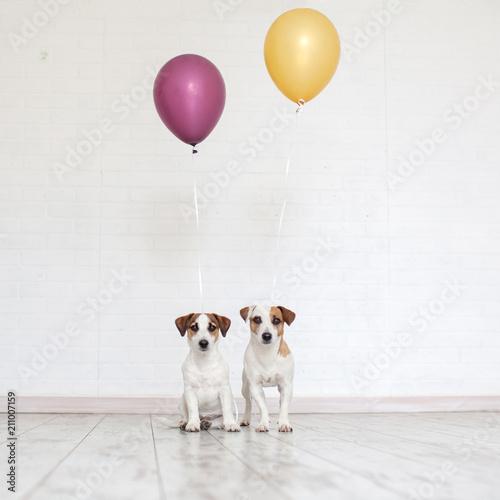 Leinwanddruck Bild Dog with a balloon