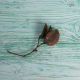 dried flower on a wooden board, composition - 211008977