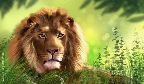 Fototapeta Illustration of lion. Digital painting.