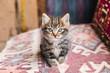 Leinwanddruck Bild - adorable little tabby kitten looking at camera