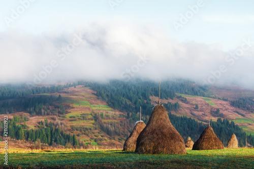 Plexiglas Herfst Amazing rural scene on autumn valley. Green grass, blue sky and haystack on a foreground. Carpathians, Ukraine, Europe.