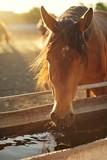Portrait of a brown horse closeup - 211023929