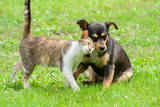 cat and dog are touching their heads. Beautiful animal friendship. Cat and dog love - 211037596