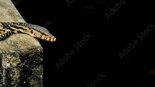 Aluminium Kameleon black and yellow lizard is sunbathing
