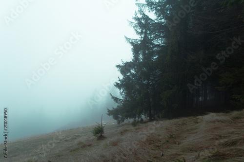 Wejście do lasu nieopodal polany