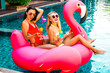 Two cool sexy girls sunglasses having fun in the pool floating on a large inflatable pink flamingo in a hotel on summer vacation on a tropical island. The concept of summer leisure freedom of pleasure