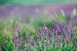 Flowers. - 211070723