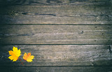 Yellow gold colored autumn season leaves decoration on copy space wooden planks. - 211104745