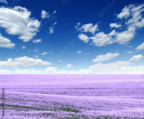 Spring flower field - 211114530