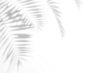 Shadows from palm trees on a white wall - 211123135