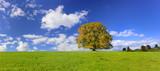 Alleinstehende Buche als Einzelbaum im Herbst - 211131102