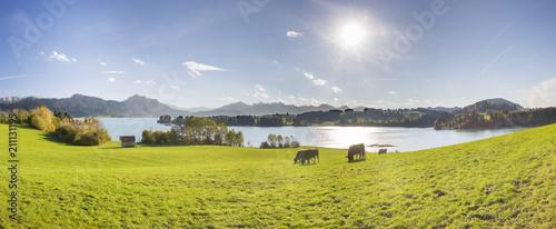 Poster Panorama Landschaft im Allgäu am Forggensee