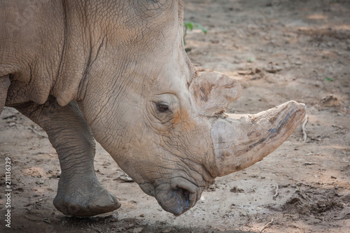 Plexiglas Neushoorn Rhino head close-up