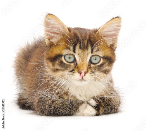 Kitten on white background. - 211142982