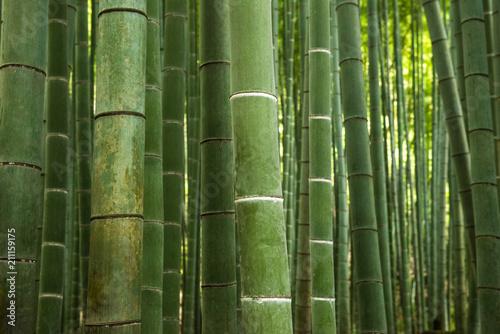 Fototapeta Bamboo forest, Japan