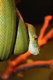 snake - 211165140