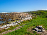 Rocky beach, grass feild with fire place, at ocean, south africa - 211179739
