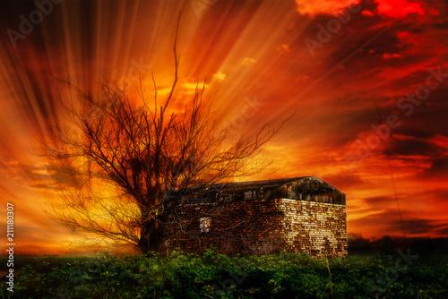 Fotobehang Bruin Toter Baum