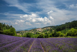 Lavender fields and a hilltop town in Provence, France