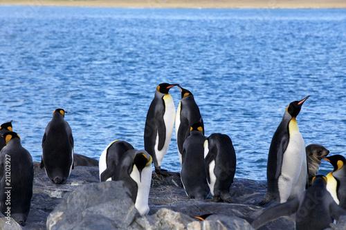 Foto Spatwand Antarctica Penguins in and around the antarctic peninsula
