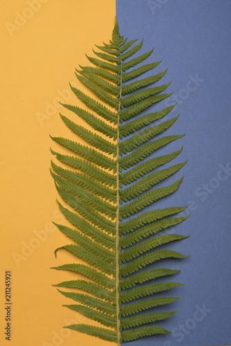 Fern leaf on a colored background. - 211245921