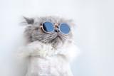funny cat portrait in sunglasses - 211259199