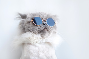 funny cat portrait in sunglasses © otsphoto