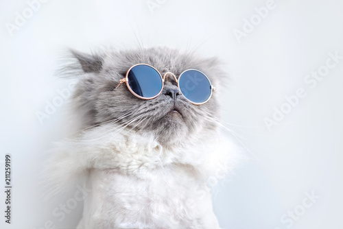 funny cat portrait in sunglasses - 211259199
