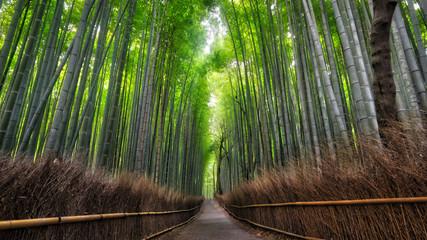 Arashiyama Bamboo Forest © Christian Dagnæs