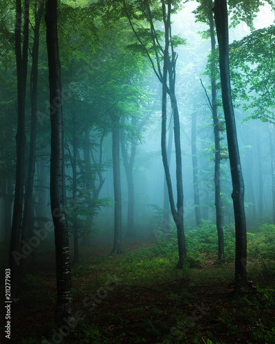 Spooky light in blue foggy forest with greeen vegetation. Autumn misty morning in the woods. Horror forest