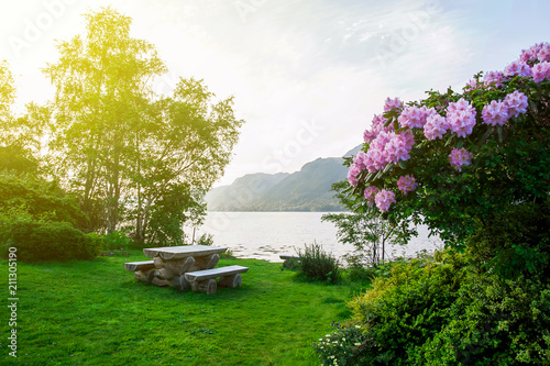 wooden bench on the green grass on the lawn near the bay, a flowering bush in the foreground, sunset