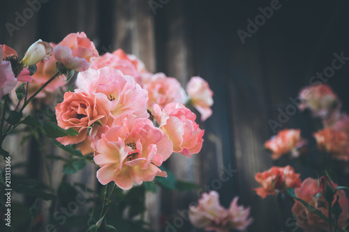 Rosa Rosen auf Strauch, Holz im Hintergrund, Textfreiraum