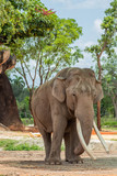 Elephant Standing on Sunny Day