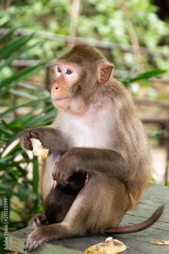 Aluminium Aap Monkey with baby monkey