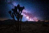 Joshua tree park under a starry night, in Mojave Desert, California - 211339715