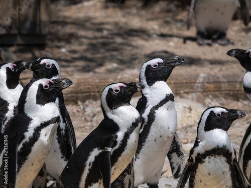 Aluminium Pinguin Manchots