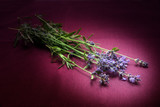 fresh lavender flowers illuminated with a spot on dark pink fabric, copy space, close up - 211361551