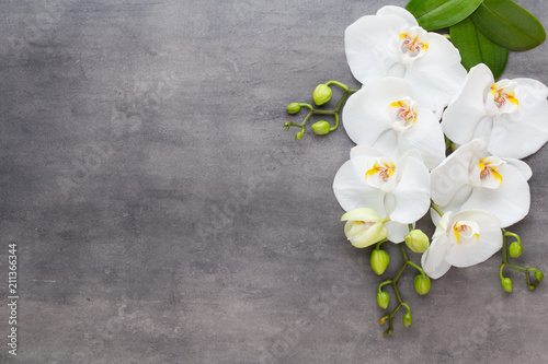 Beauty orchid on a gray background. Spa scene. - 211366344