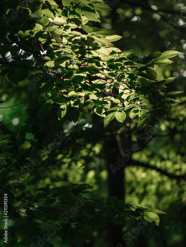 Forest details - 211391354