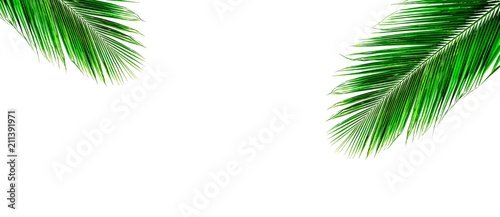palm coconut leaf isolated on white background